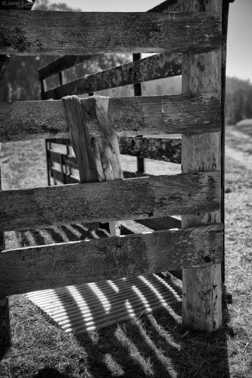 Mendocino, Fence, Black and White