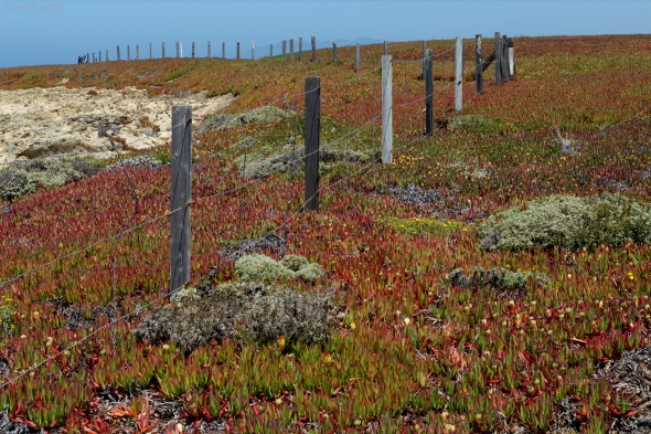 Sonoma, Duncan's Cove, Fence, Landscape, Fireplant