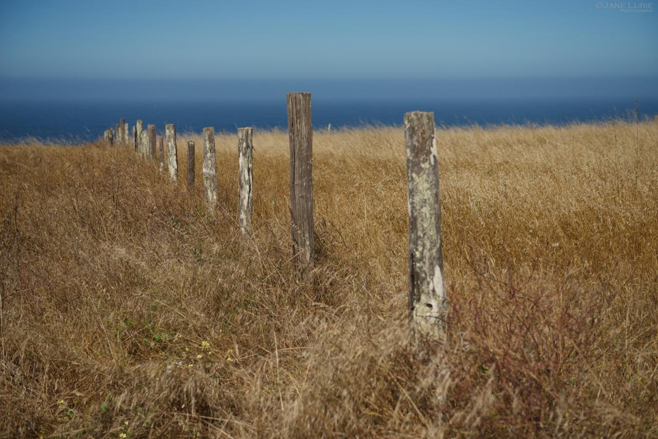 Fence Posts, Mendocino Coast