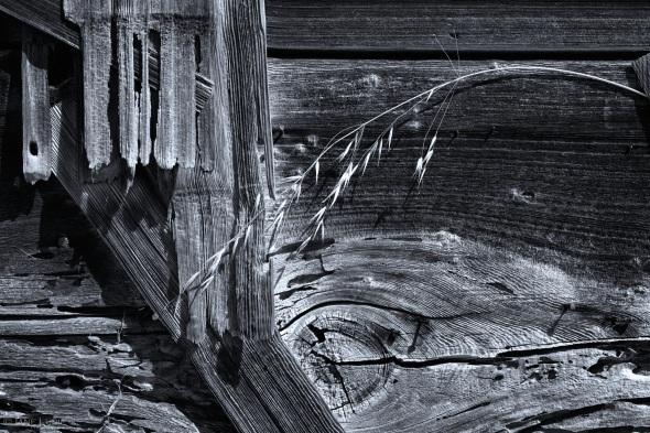 Black and White, Close-up, Mendocino, California, Barn