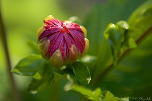 Flower, Close-Up, Nature, Nikon