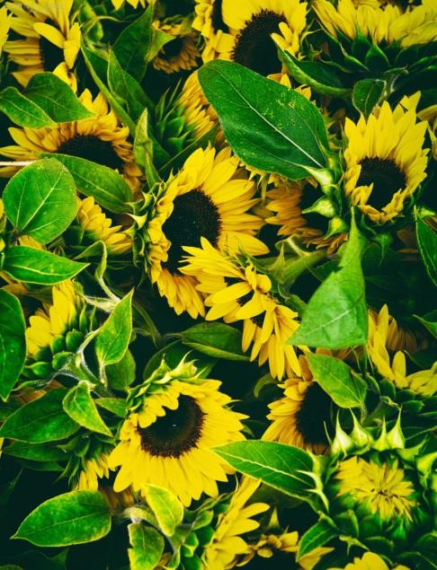 Flowers, Nature, Color, Nikon