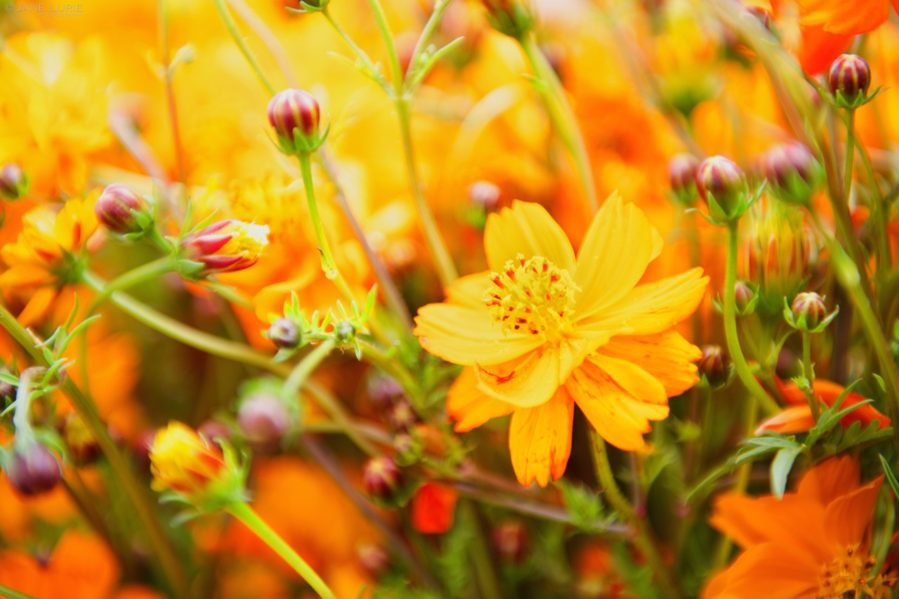 Flowers, Macro, Orange, Yellow,