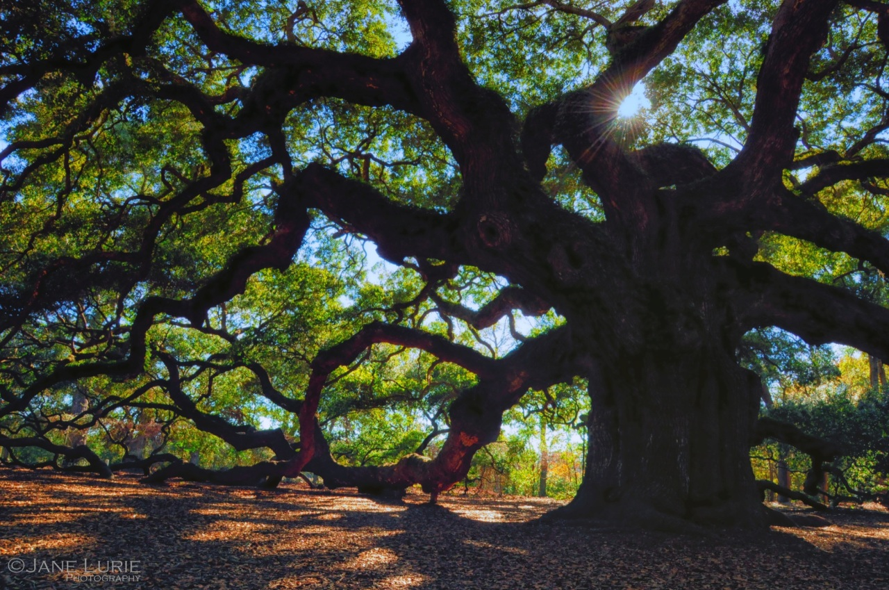 Nature Photography, Charleston, Live Oak, Travel, South Carolina