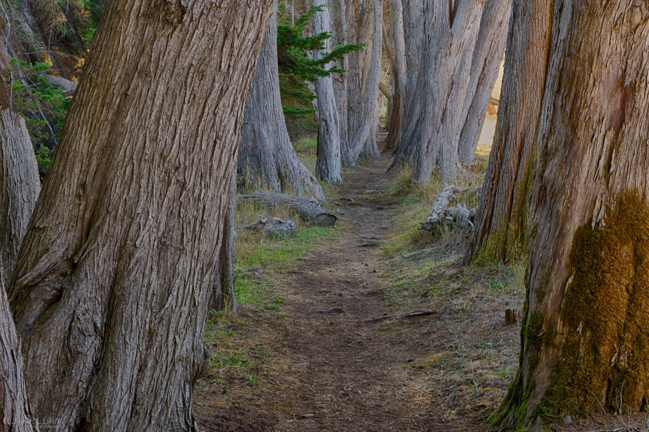 Sea Ranch, Cypress Trees, California, Landscape, Nature,