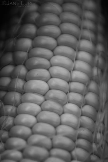Corn, Macro, Black and White