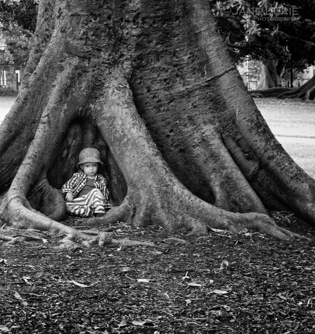 Portrait, Sydney, Fig Tree, Nature, Black and White