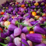 Organic, Produce