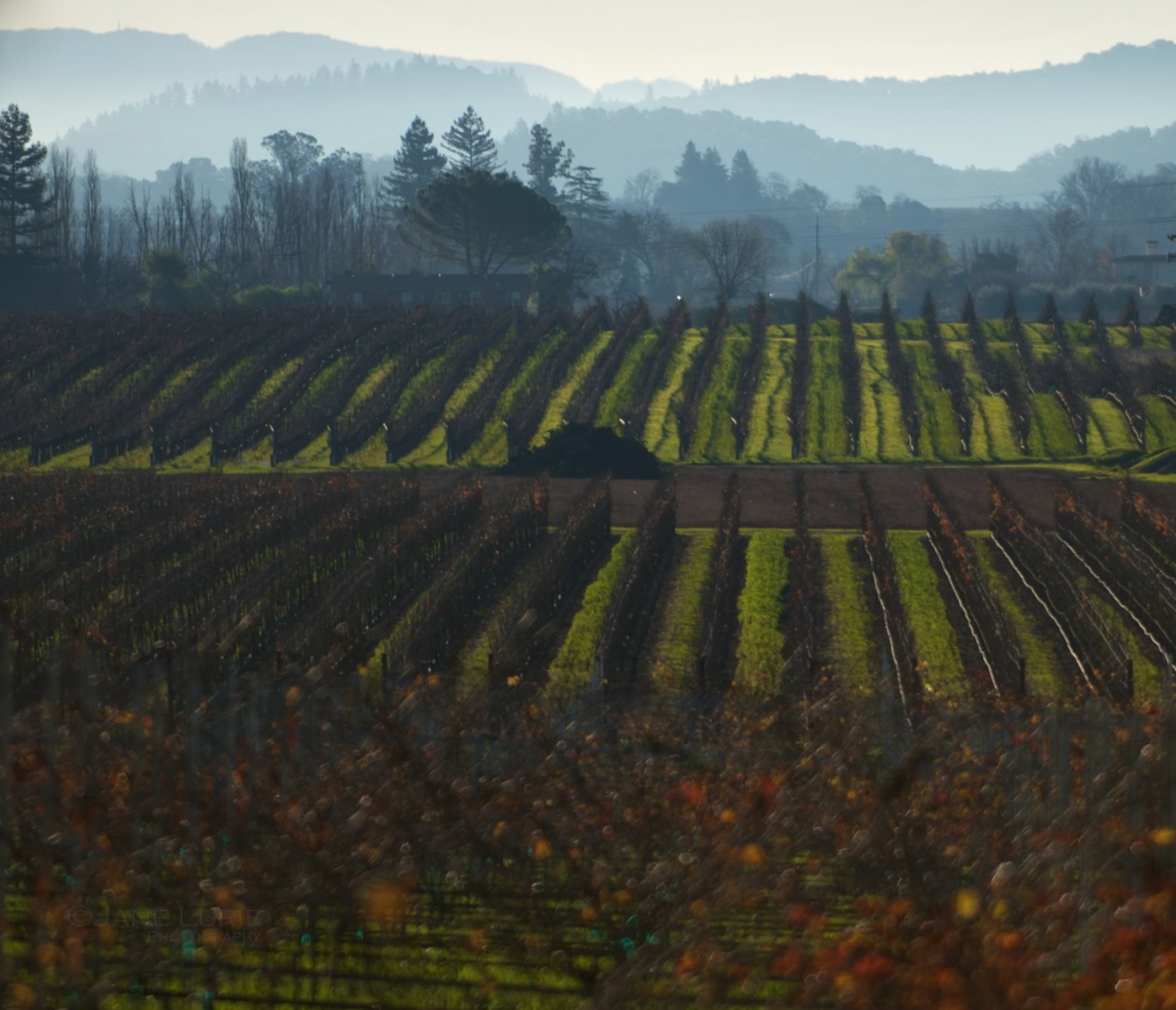 Vineyards, California, Landscape, Fog,
