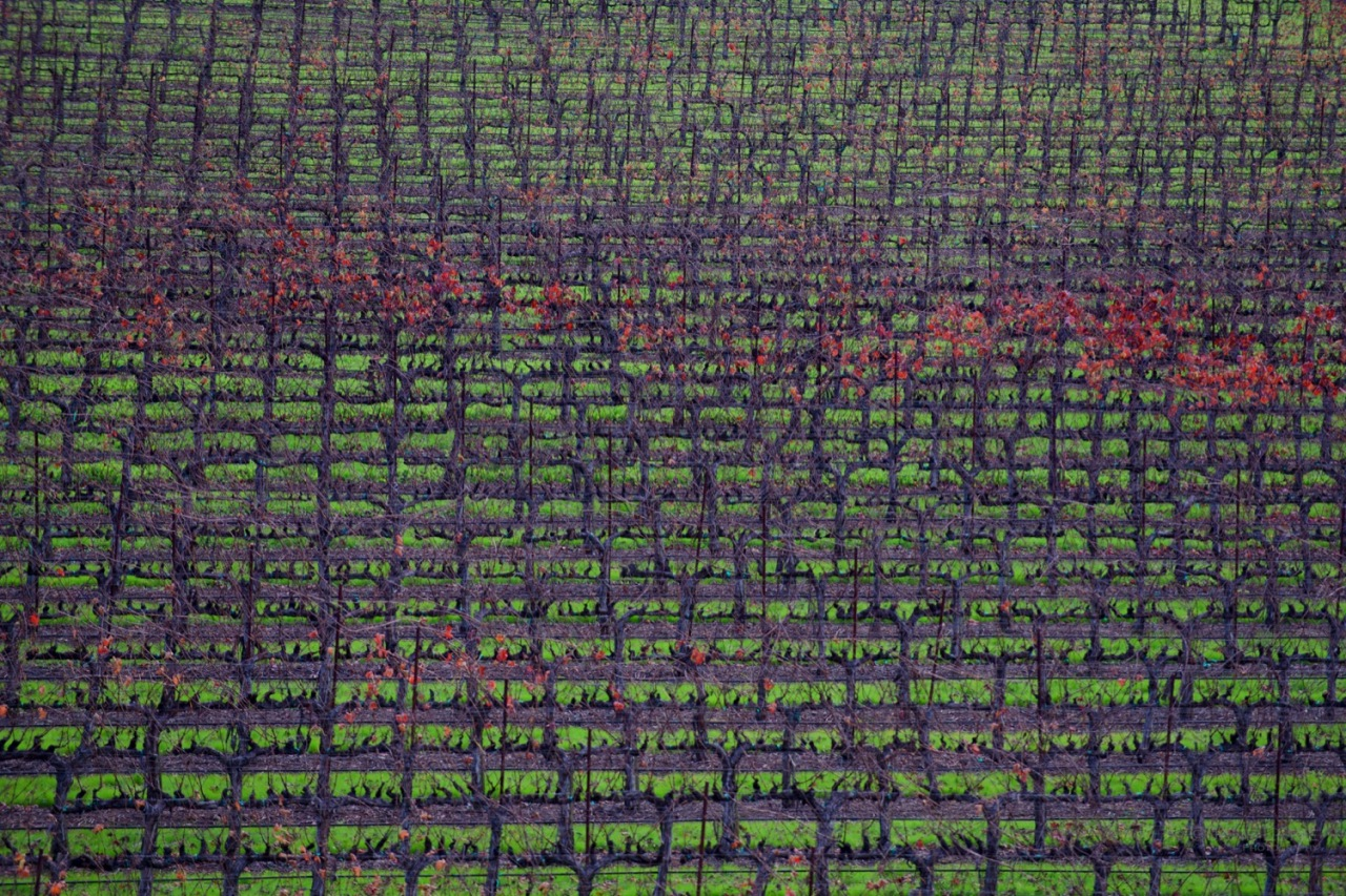 Vineyard, California, Wine, Landscape