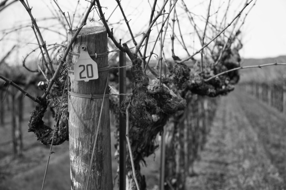 Napa, Vineyard, Black and White