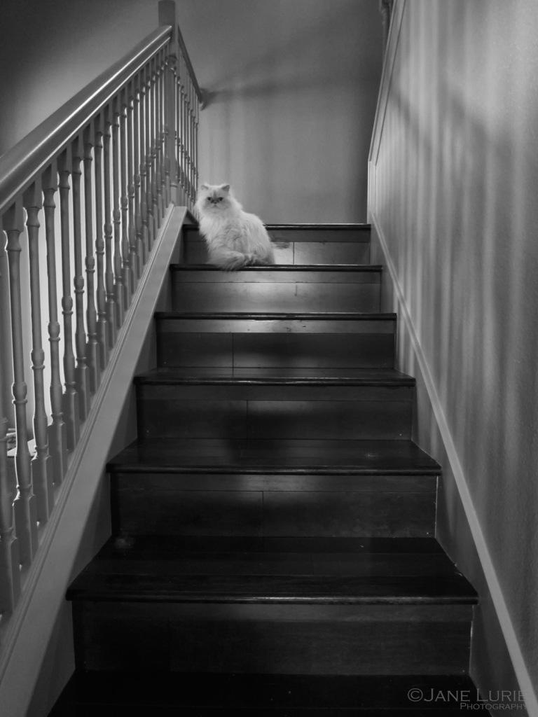 Cat, Portrait, Nikon, Black and White