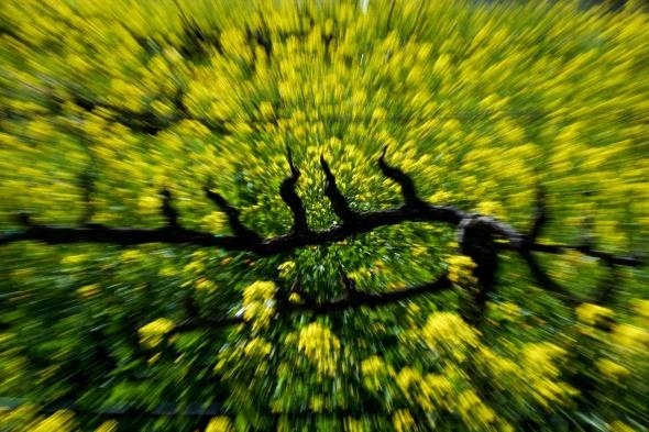 Landscape, Vineyard, California, Nikon, Agriculture, Abstract