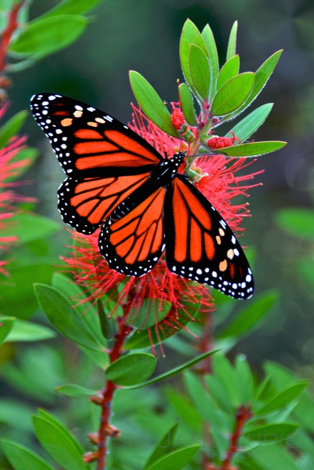 Nature, Butterfly, Insect, Close-Up