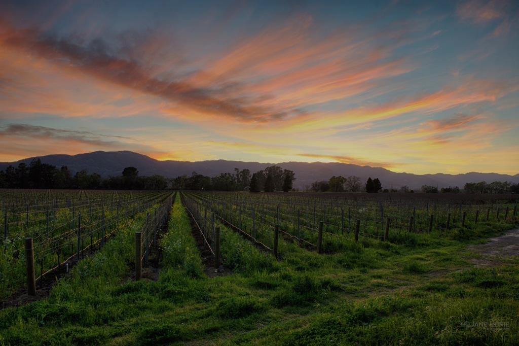 Vineyard, Sunset, Landscape, Nikon,