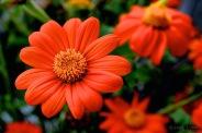 Flower, Nature, Close-up,