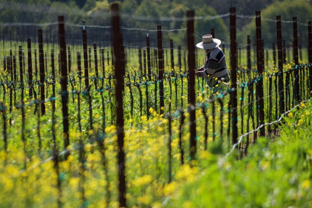 Landscape, Vineyard, California, Nikon, Agriculture