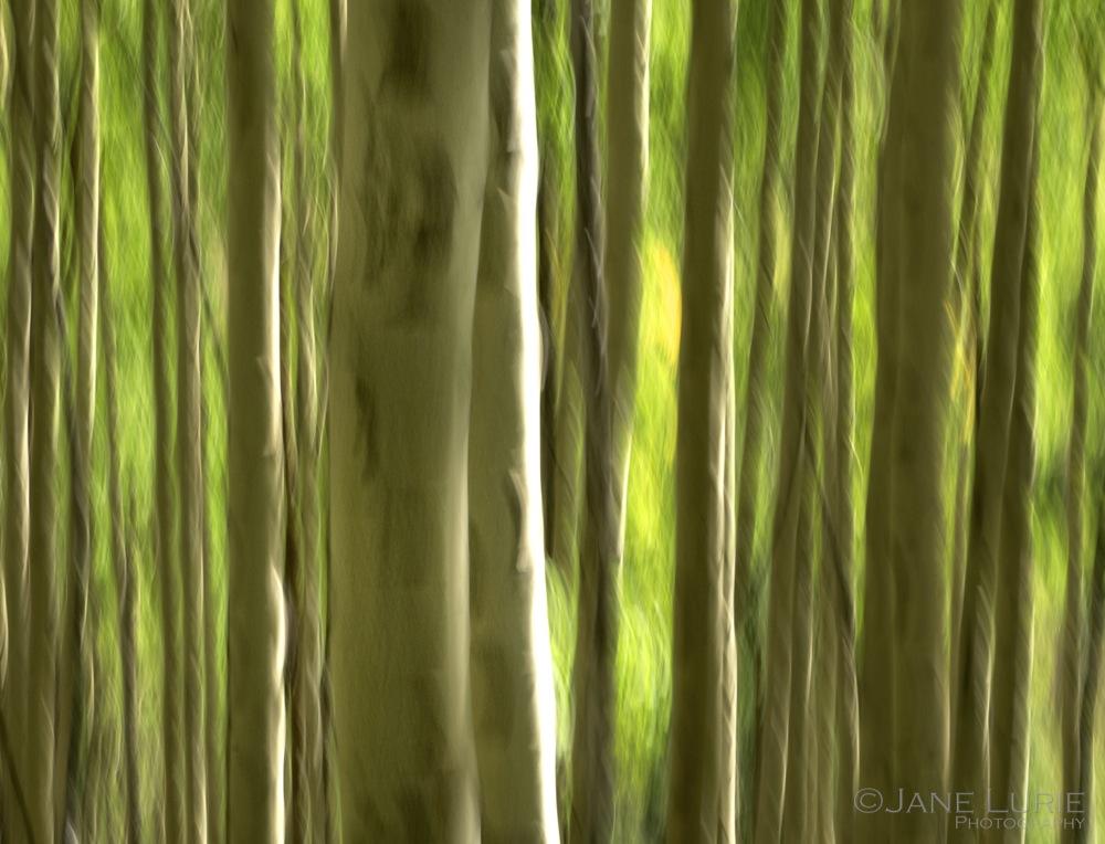 Impressions of Nature