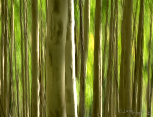 Abstract, Impressionism, Photography, Nikon