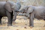 Brothers, Botswana
