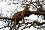 Afternoon Nap, Botswana