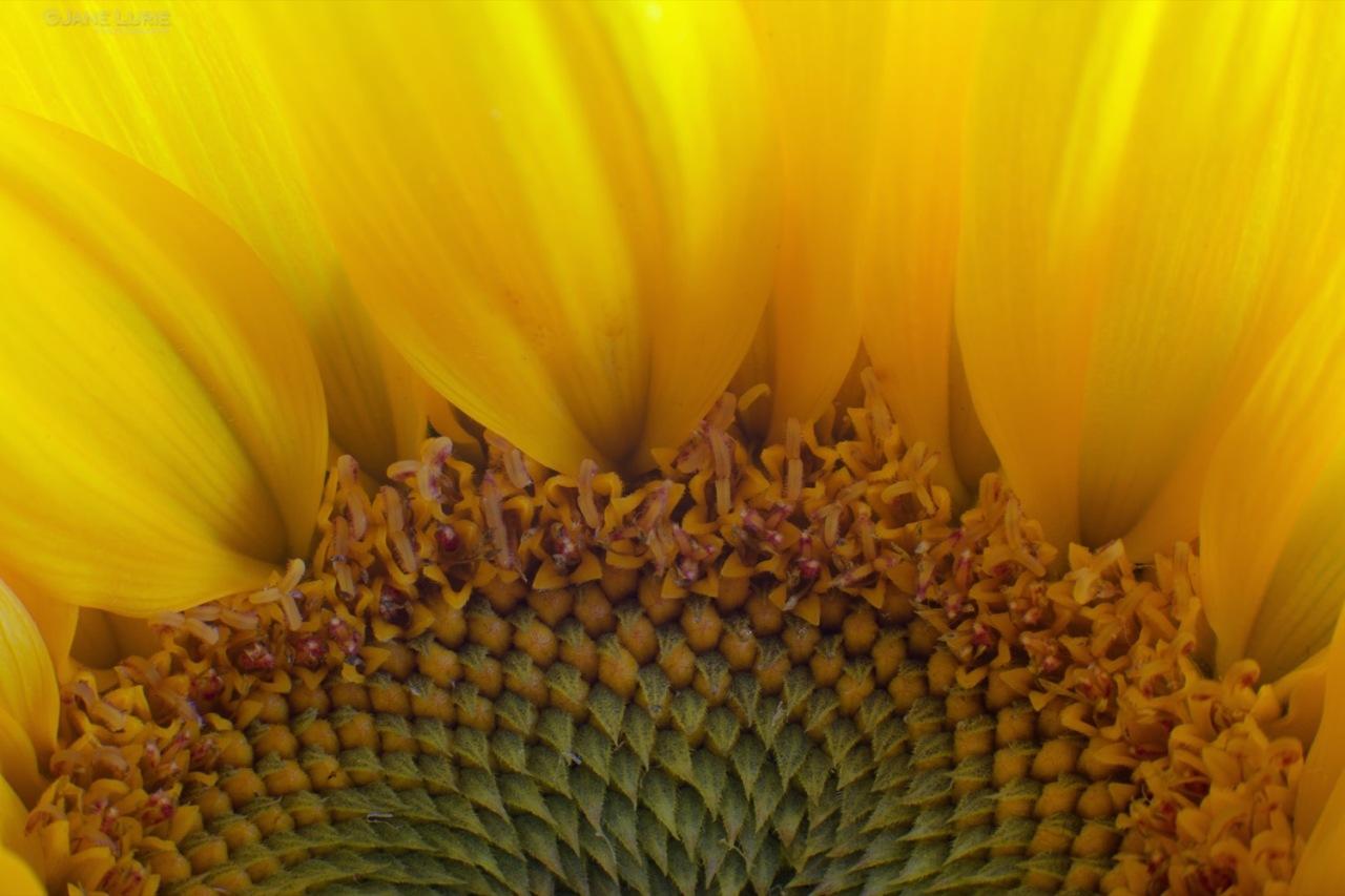 Flowers, Macro, Nature, Art, Photography