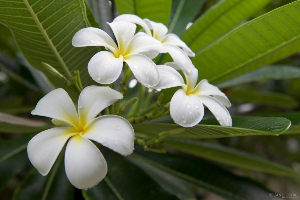 Flowers, Macro, Nature, Nikon