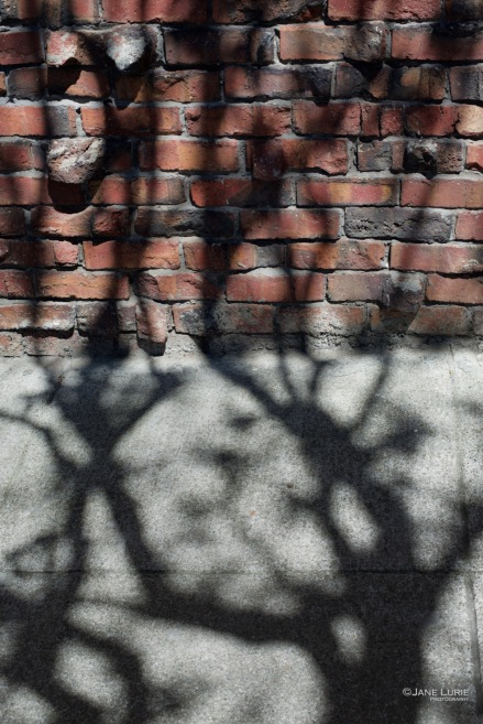 Shadow, City, San Francisco, City, Abstract