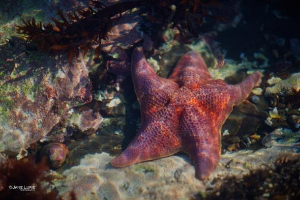 Ocean, Marine, California, Fitzgerald Marine, Science, Landscape, Nature