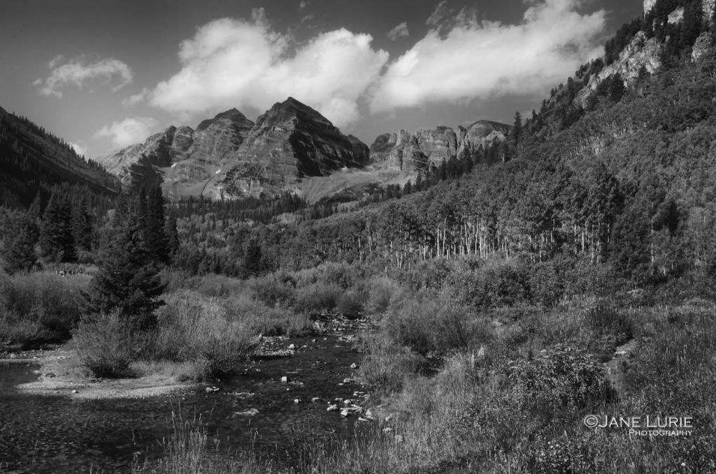 Trees, Aspen, Colorado, Nature, Environment,Black and White, Landscape