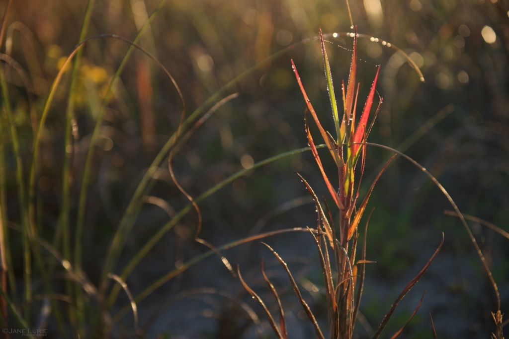 Nature, Kiawah, South Carolina, Macro, Photography, Nikon, Landscape