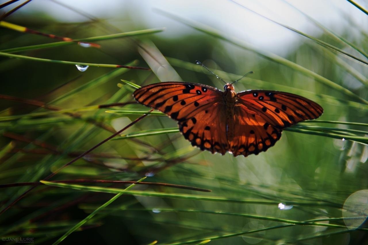 Nature's Gifts: Kiawah Island,SC