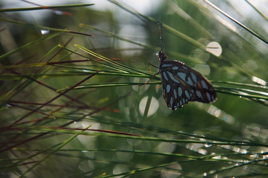 Nature, Kiawah, South Carolina, Macro, Photography, Nikon, Landscape
