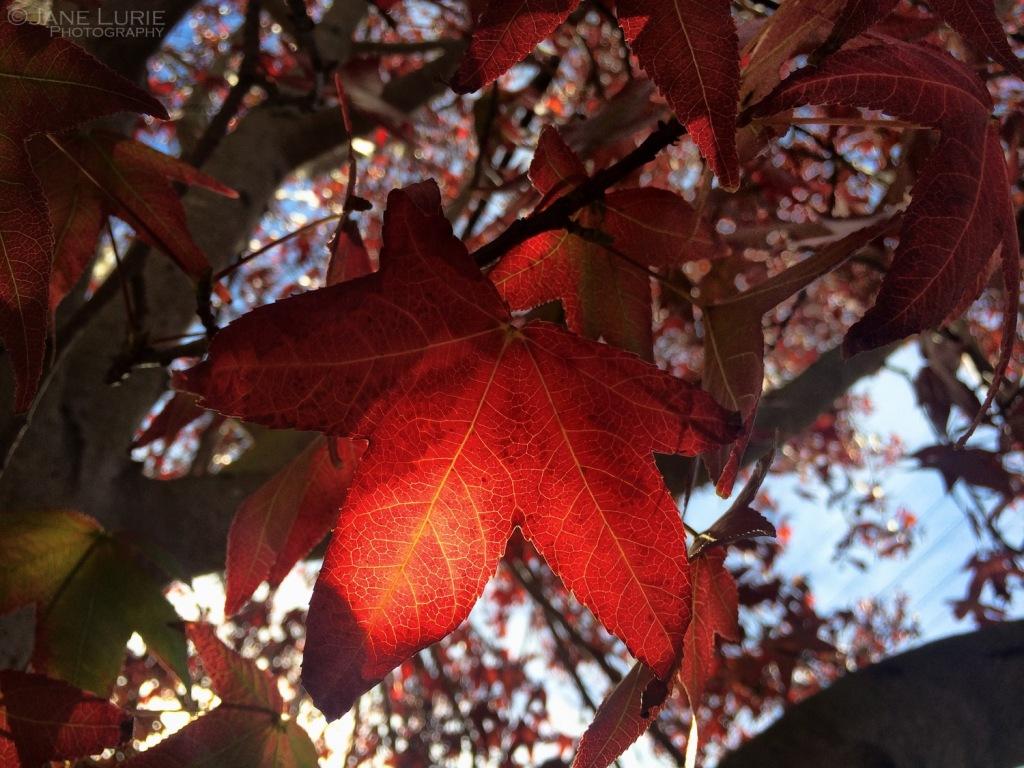 Autumn, Nature, Close-up, Nikon, Backlit