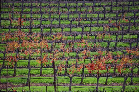 California, Nikon, Landscape, Vineyard, Photography