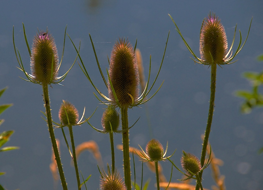 California, Landscape, Autumn, Nature, Nikon, Photography,