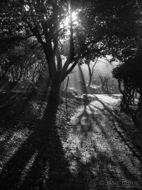 Jane Lurie, Photography, Travel, Landscapes, Street Photography, Nature,