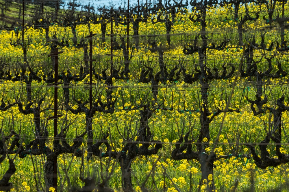 Mustard Season: California Wine Country