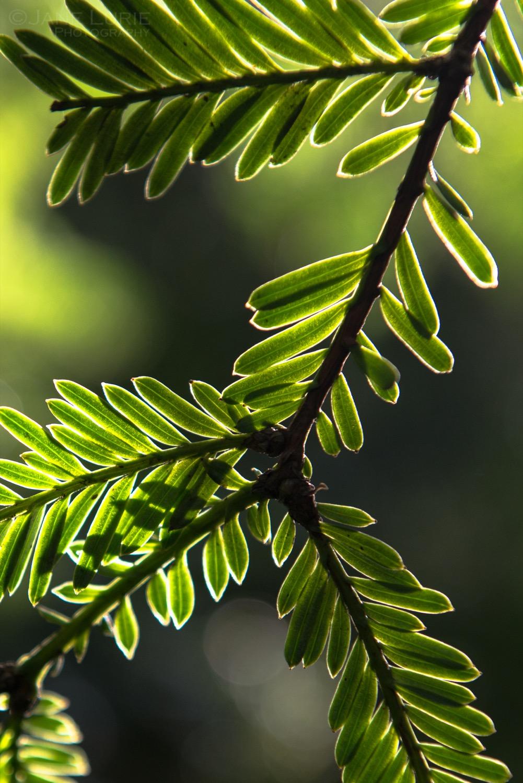 Nature's Harmonies