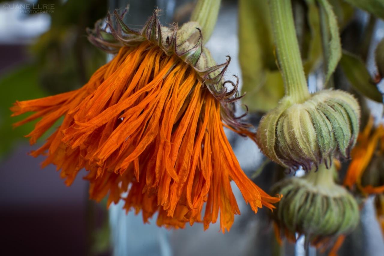 A Flower's FinalBow