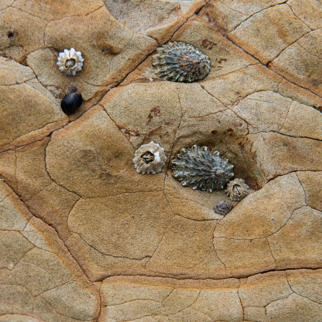 Shells, Beach, Nature, Rocks, Ocean Nikon, Photography, California, Macro, Close-up