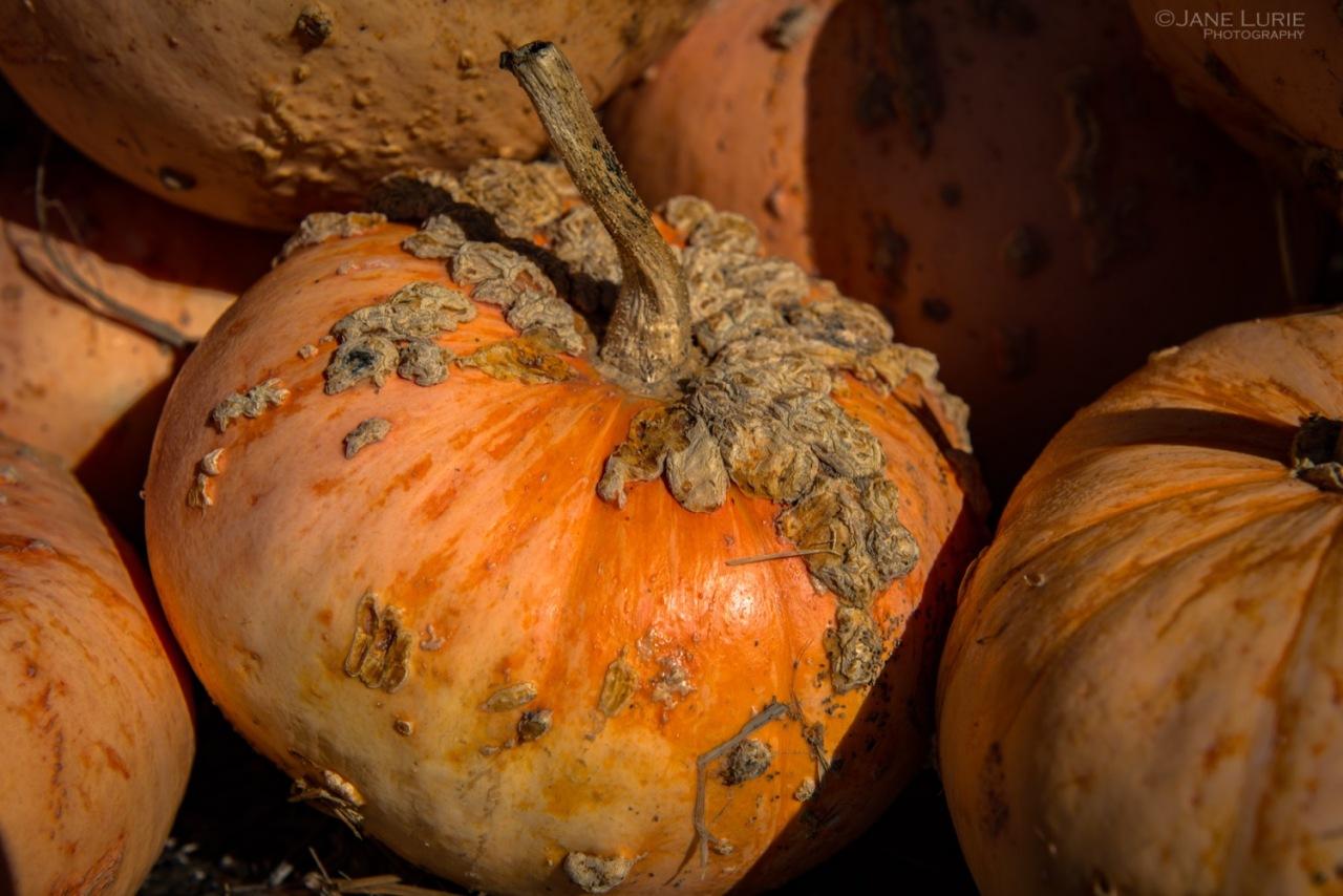 Farm, Produce, Organic, California, Close-up, Photography