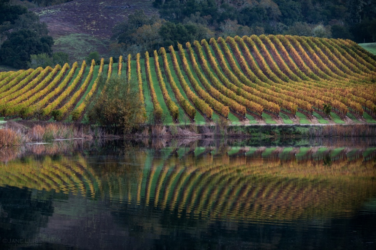 Autumn Vineyards, Sonoma, CA