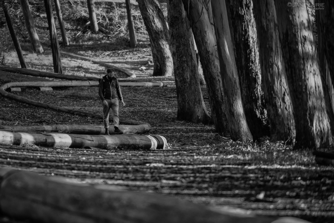San Francisco, California, Presidio, Wood Line, Monochrome, Andy Goldsworthy