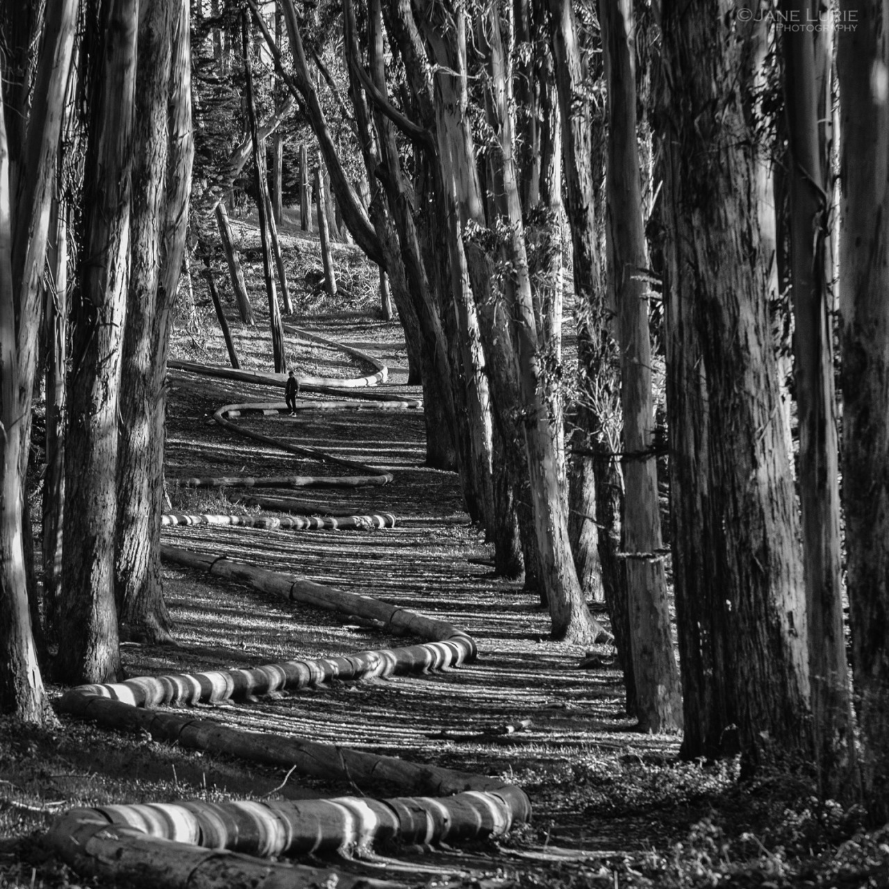 Walking the Wood Line, The Presidio, San Francisco