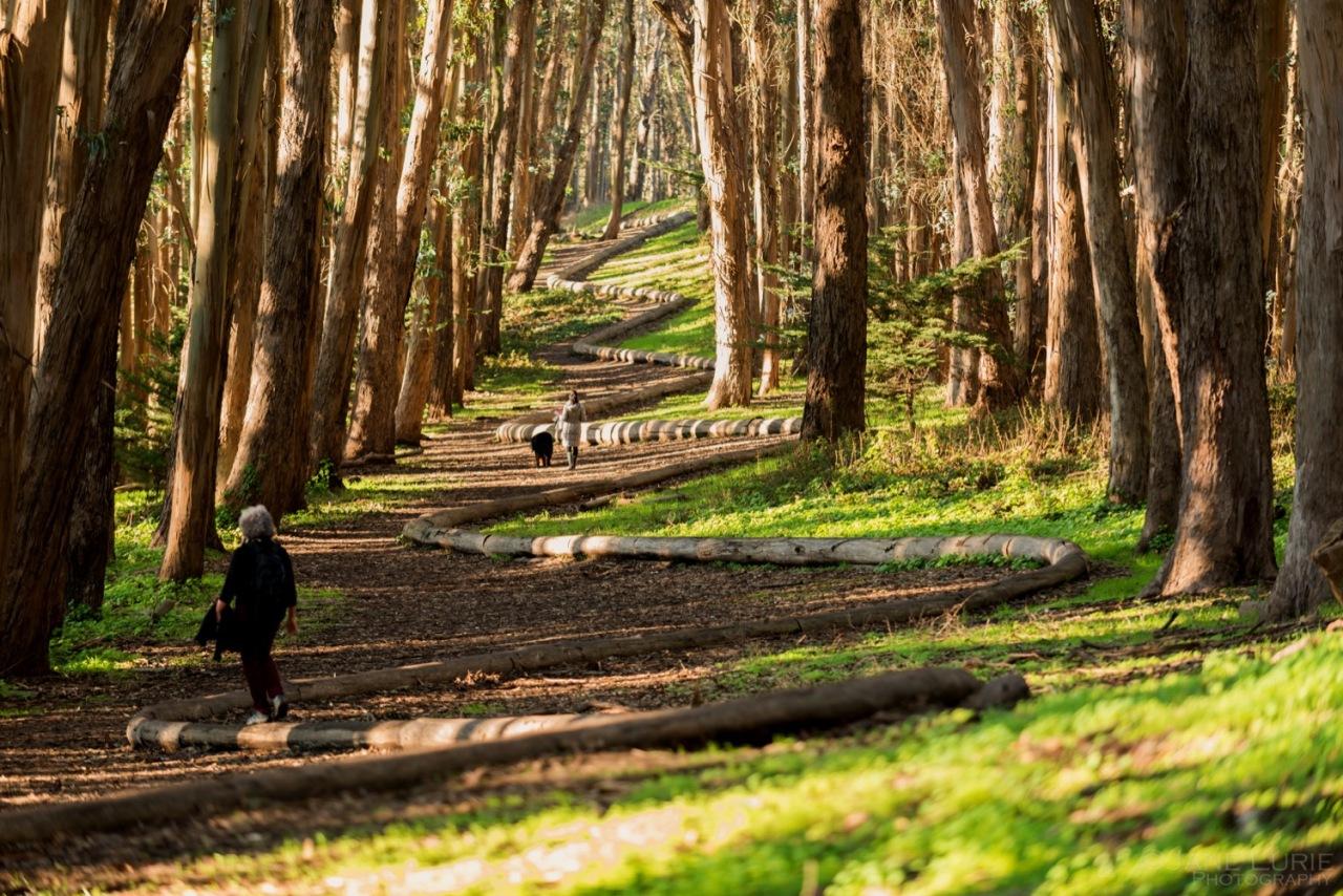 San Francisco, Andy Goldsworthy, Presidio, Nature, Photography, Landscape