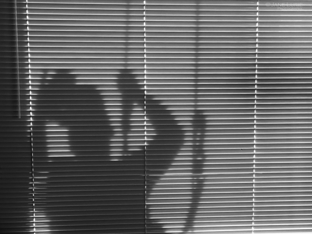 Portrait, Light, Photography, San Francisco, City