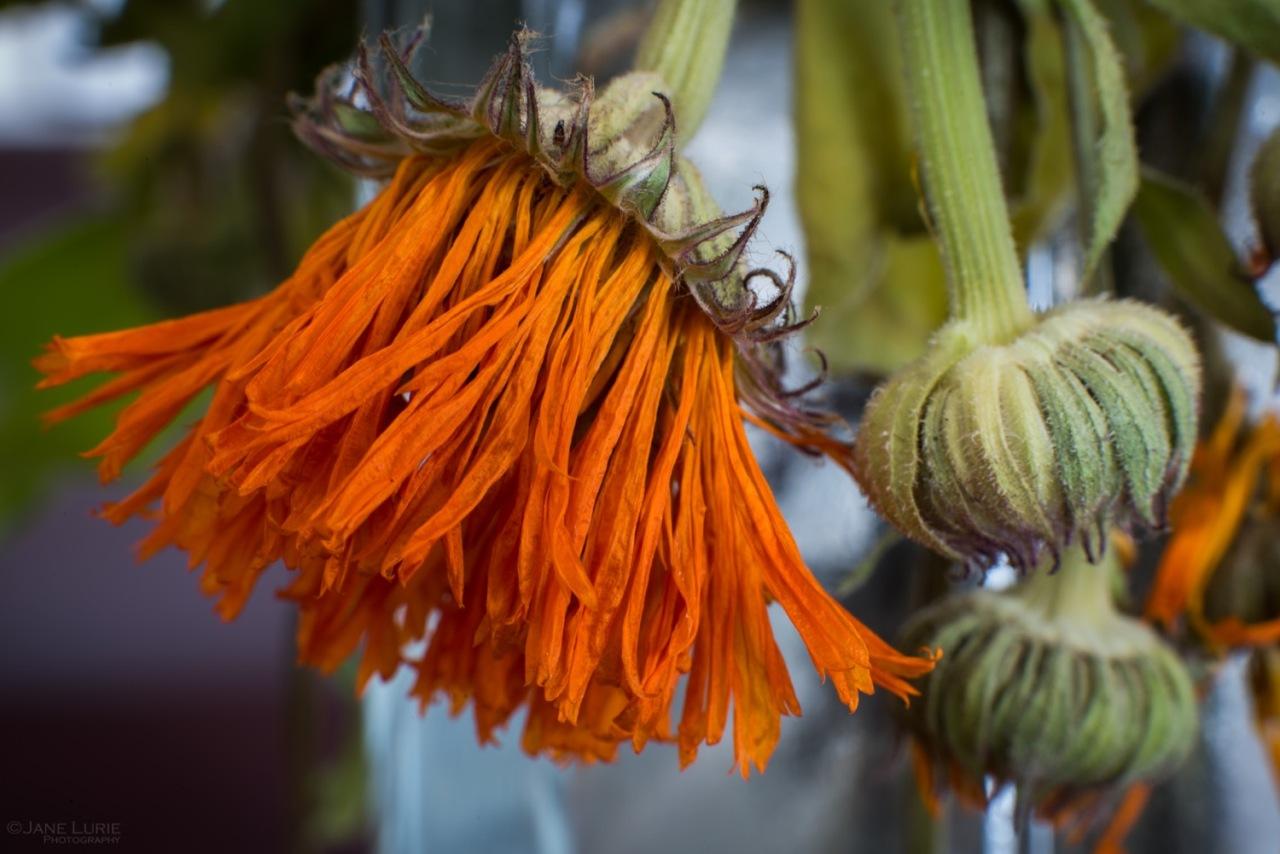 Flower, Macro, Close-up, Nature, Nikon