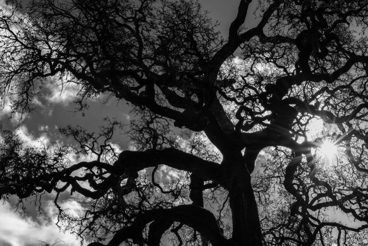 Monochrome, Landscape, California, Trees, Rural