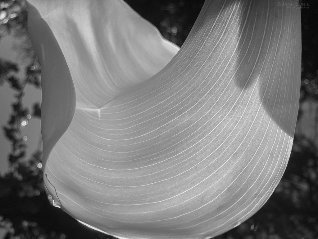 Photography, Monochrome, Black and White, Nature, Close-up